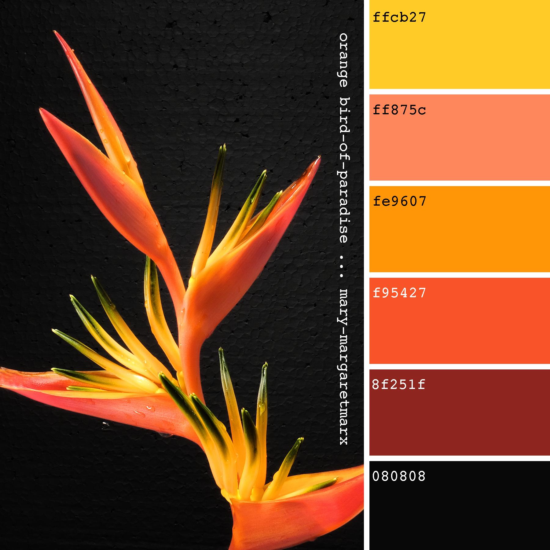 Orange Bird Of Paradise Mary Margaretmarx Color Colors Colour Colours Colorpalette Colorpalett Black Color Palette Pantone Color Yellow Colour Scheme