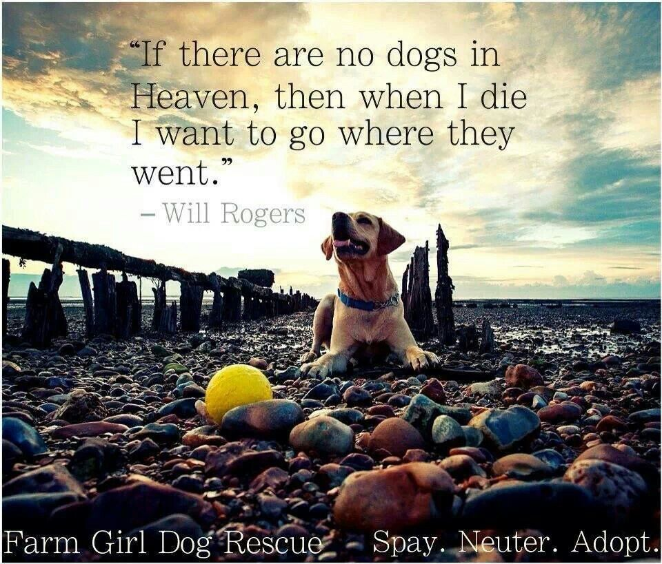 If There Are No Dogs On Heaven Then When I Die I Want To Go