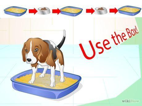 Cómo Entrenar A Un Perro Para Usar Una Caja De Arena Arena Para Perros Entrenamiento Perros Adiestramiento Perros