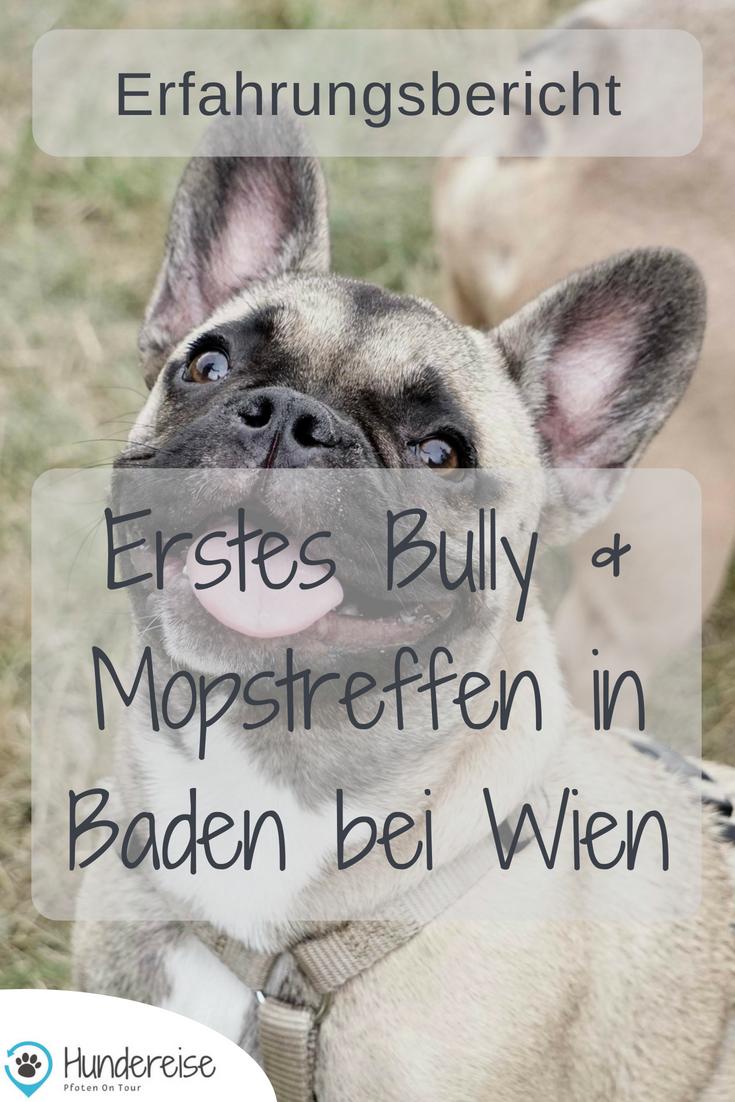 Erstes Bully Und Mops Treffen In Baden Hunde Mops Und Hunde Fotos