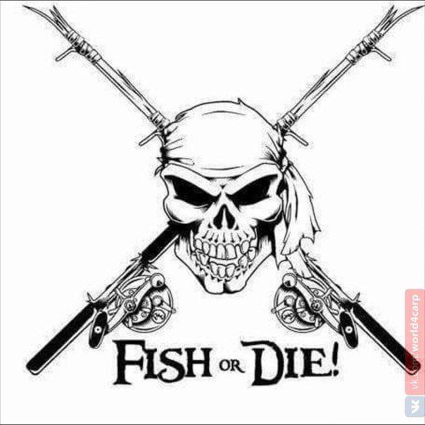 World4Carp | карпфишинг со всего мира | Рыбалка, Смешно ...