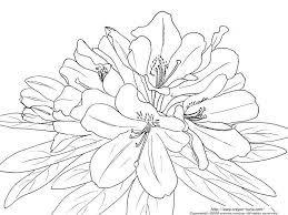 塗り絵 11月 花の画像検索結果 ぬりえ Colorful Flowersflowers
