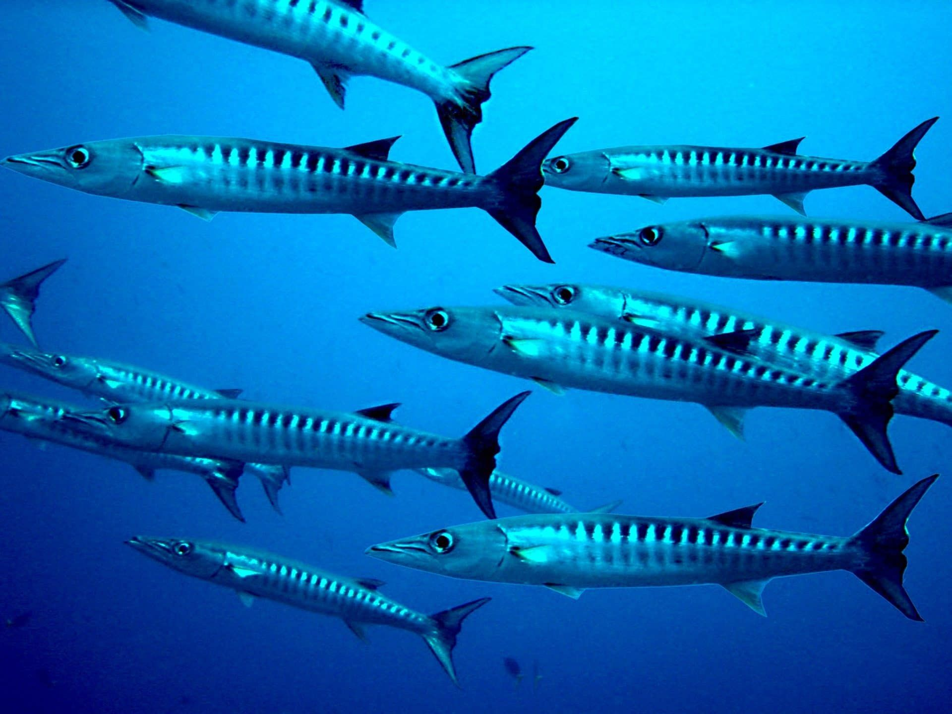 Top 5 Dive Sites In Saba Dutch Caribbean Deeperblue Com In 2020 Marine Ecosystem Sea Life Creatures Animals