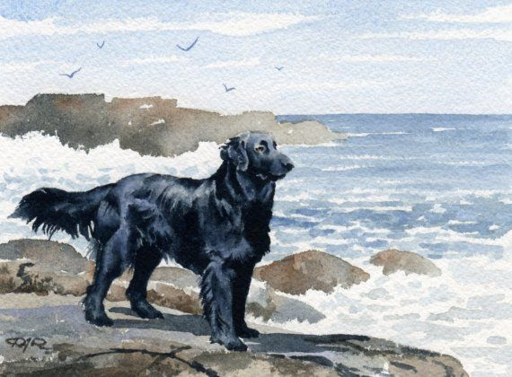 Flat Coated Retriever Art Print Watercolor By Artist D J Rogers