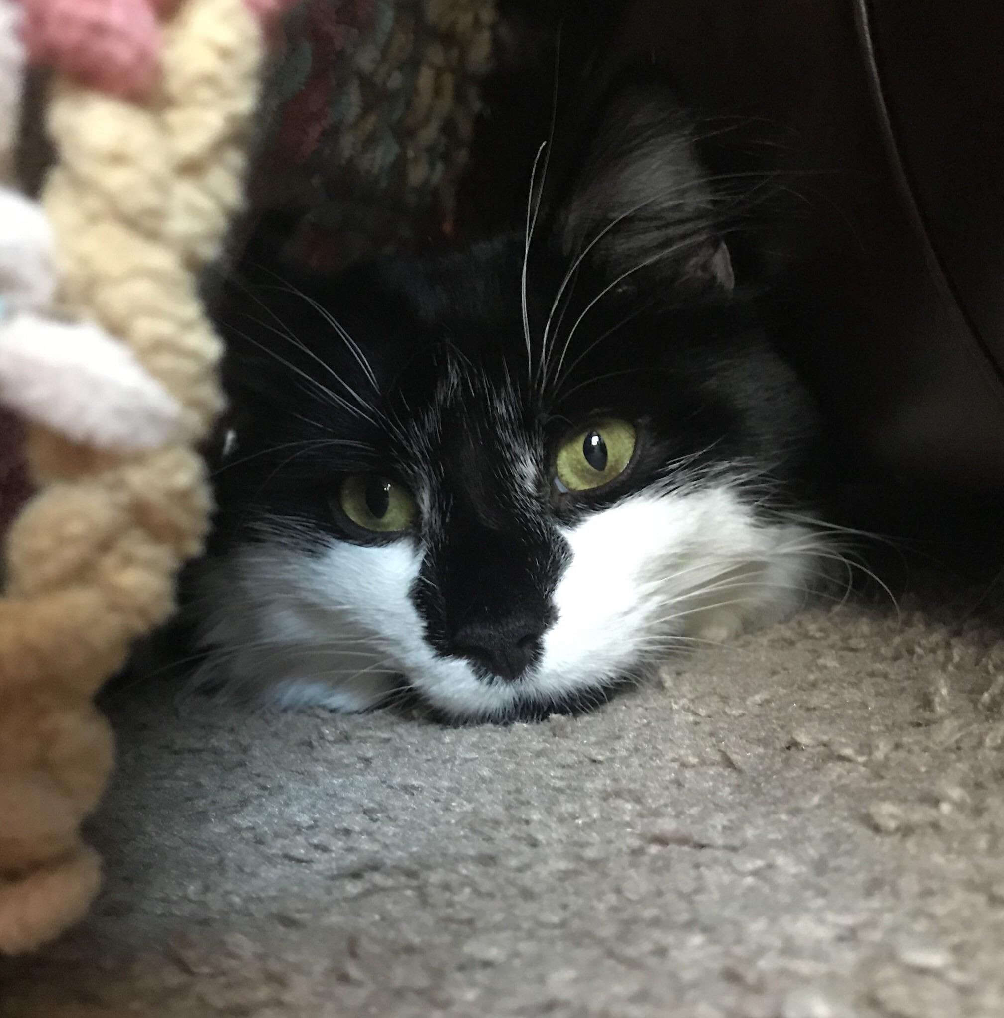 I Like To Spend Cold Days In My Blanket Fort Cat Has Fleas Cat Pictures For Kids Cat Lovers