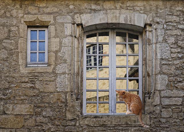 window cat    in Sarlat, Perigord