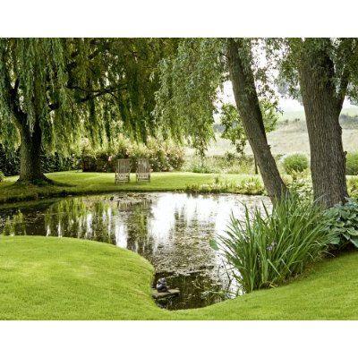 Down by the water pond with weeping willows perfect stream - Wasserteich im garten ...