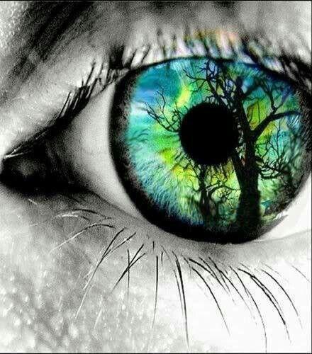 Eye. Tree. Blue. Green. Color.