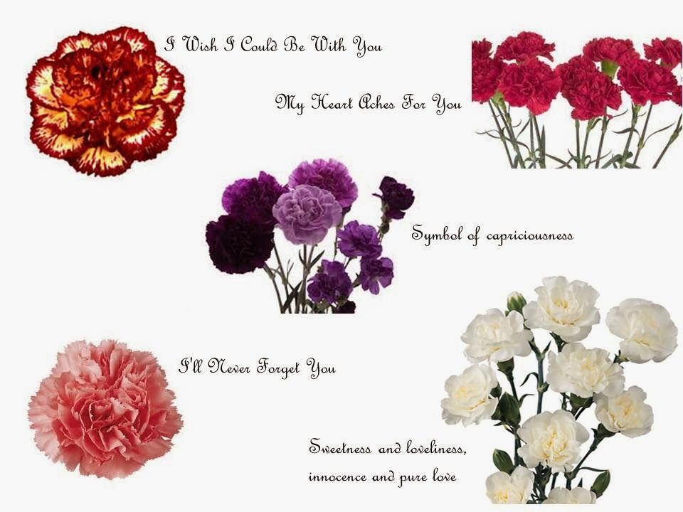 January Birthflower Carnation Meanings Of Carnations Include Fascination Distinction And Love The S History Dates Back To Ancient Greek