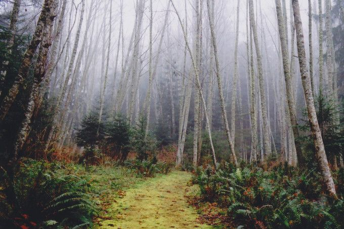 www.forestgallery.co