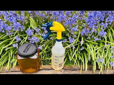 391 Fungicida Bactericida Y Repelente Muy Antiguo Youtube Jardineria Y Plantas Plantas De Orquideas Jardín De Orquídeas