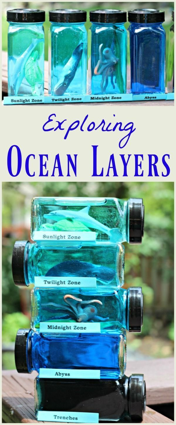 Layers of the Ocean Habitat Project: Under the Sea Science ...
