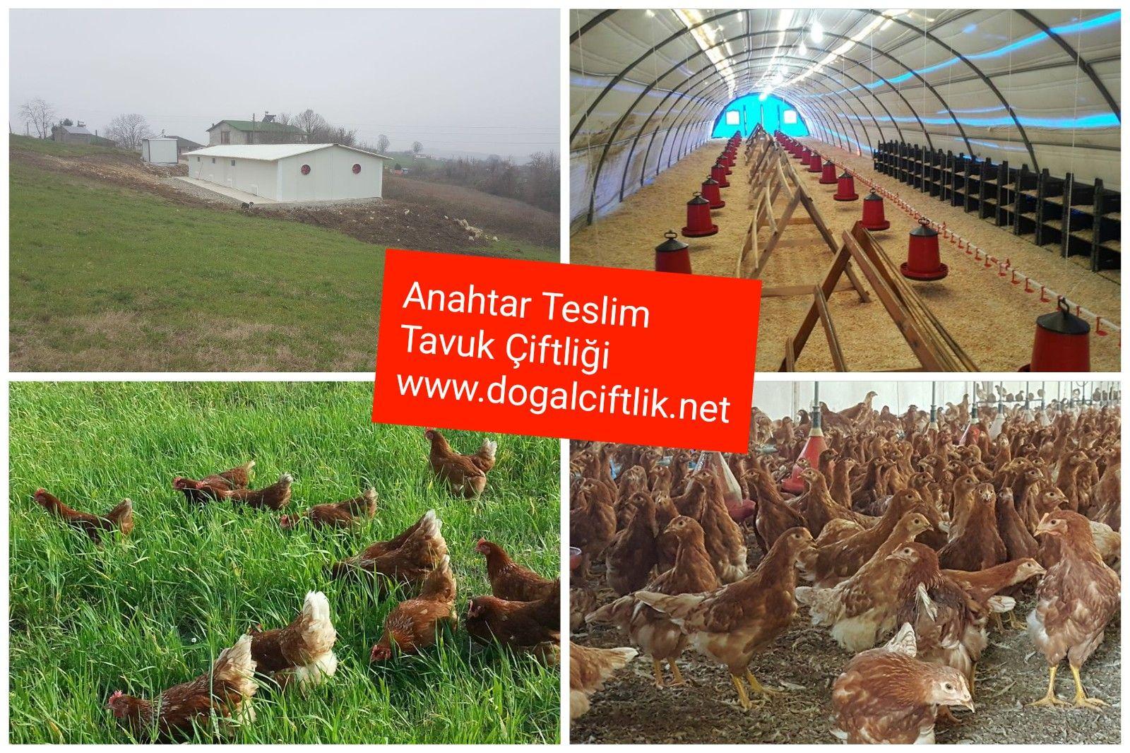 Anahtar Teslim Organik Yumurta çiftliği Fiyatları Anahtar Teslim