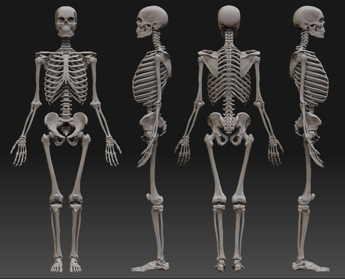 человек скелетов картинки большая честь назвать