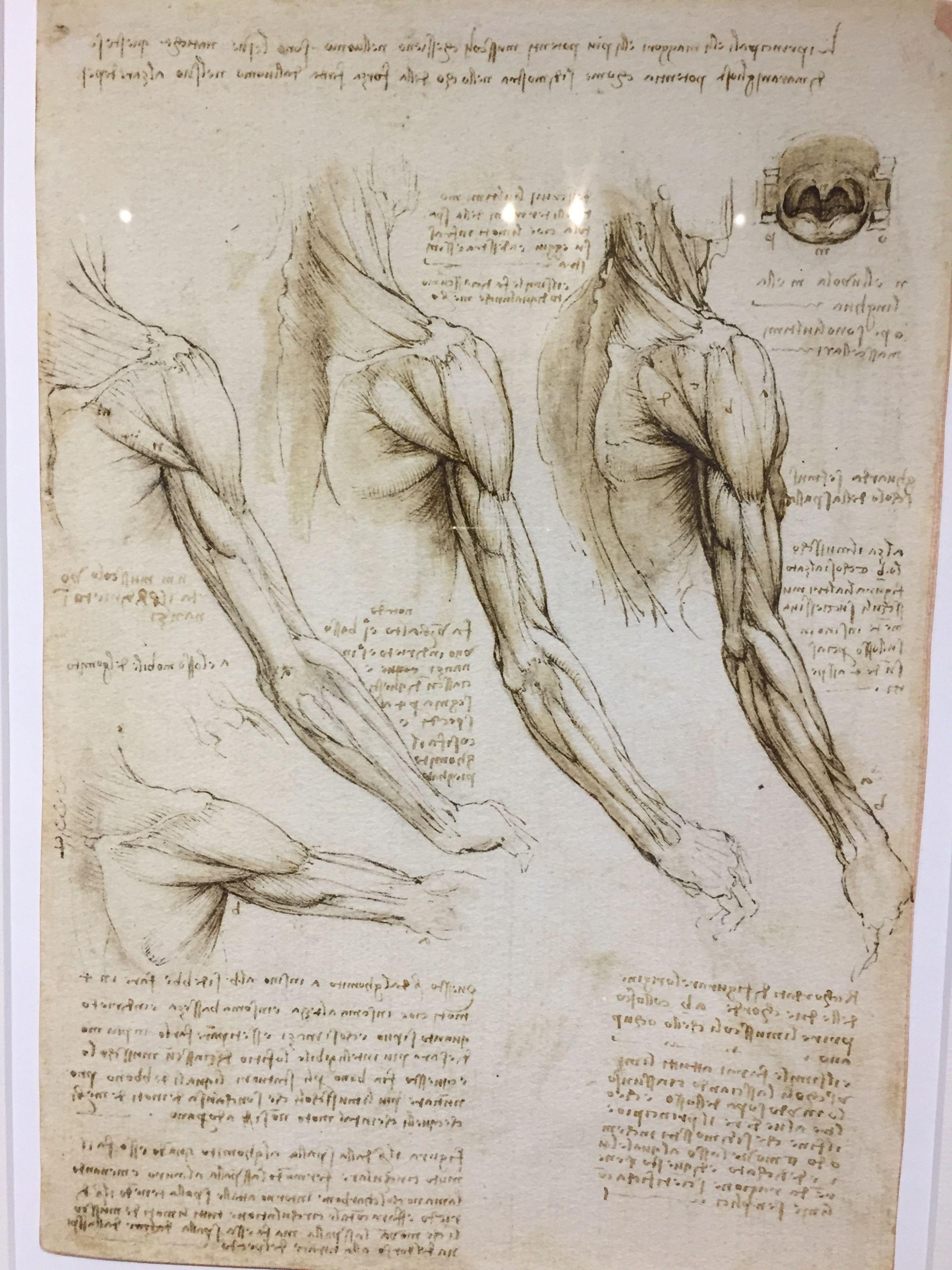 Pin von Peace and Positivity auf Leonardo Da Vinci | Pinterest