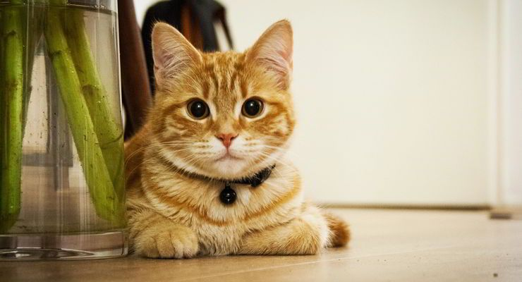 Como eliminar el olor a pis de gato os traemos nuevo un video tutorial con la soluci n al - Quitar olor a pis de gato ...