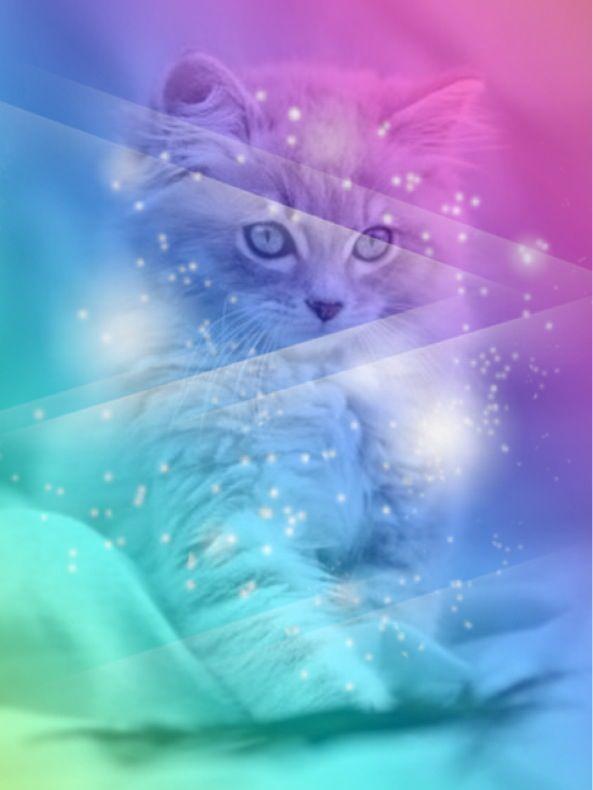 Cuteness Cat Wallpaper Animal Wallpaper Cats And Kittens