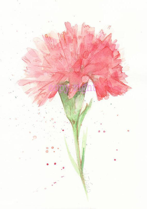 Fine Art Watercolor Painting Flower Art Red Carnation Watercolor