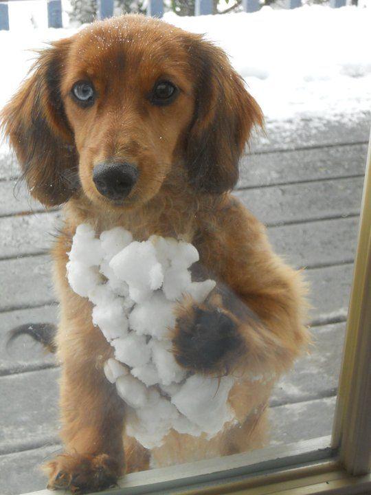 Gigi the snow magnet