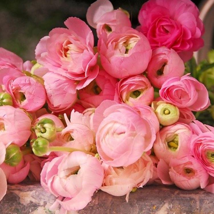 Pink Ranunculus With Images Ranunculus Flowers Beautiful Flowers Wedding Flowers