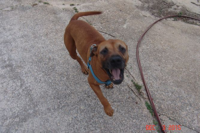 Adopt **MAX** on Dog adoption, Adoption, Animal rescue