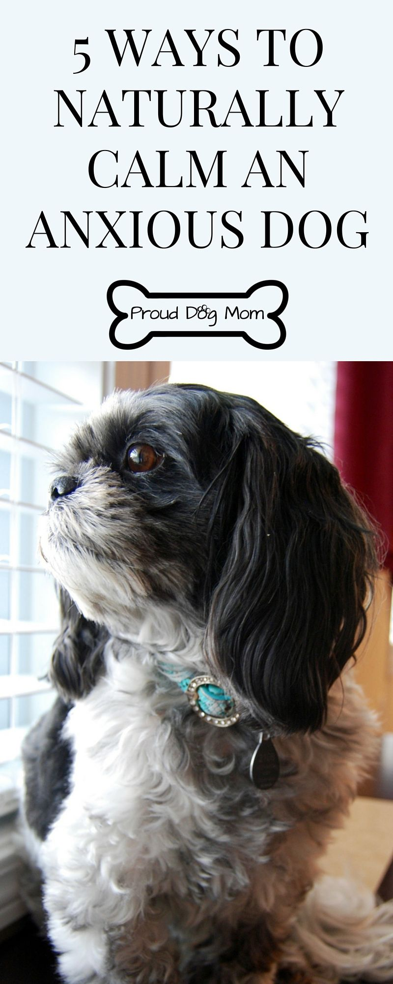 how to help guest dog relieve separation anxiety