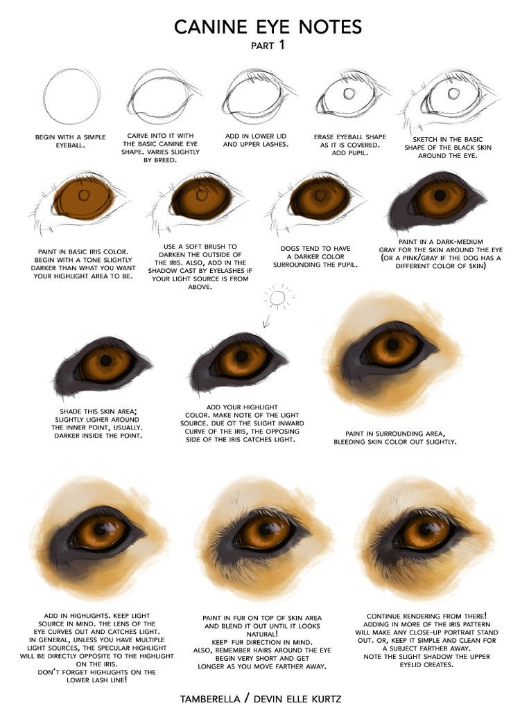 Canine Eye Notes pt 1 by TamberElla on DeviantArt | figures ...