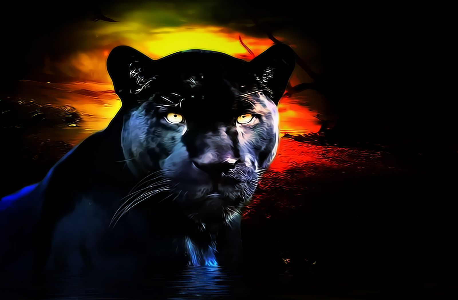 Kool HD Desktop Black Panther Wallpaper Animals