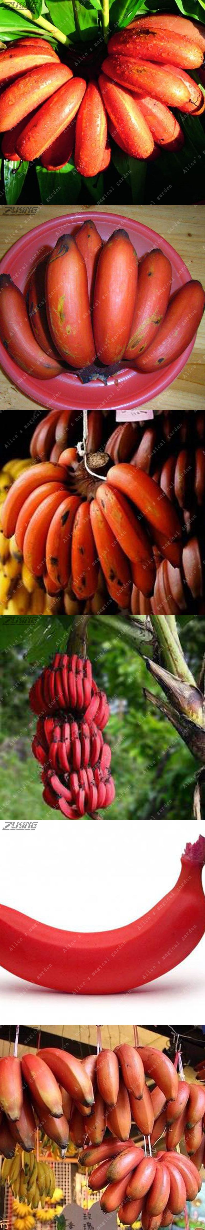 Asian plantain seed, nude lauren gottlieb fuck