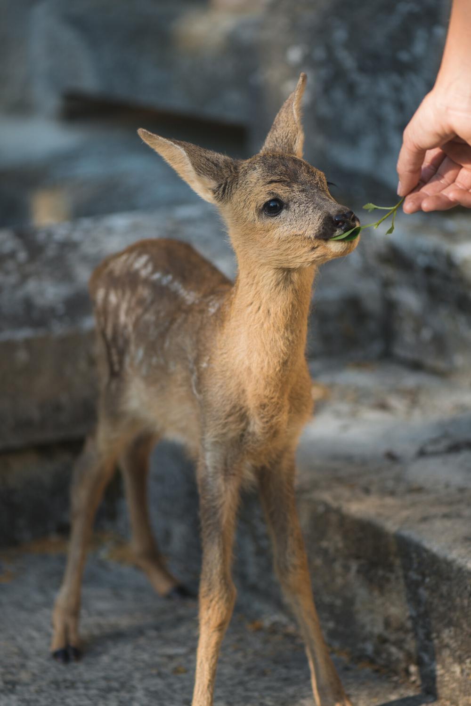 Pin Von Happy Hood Auf Ja Zum Tierschutz In 2020 Tierpatenschaft Tiere Tierschutz