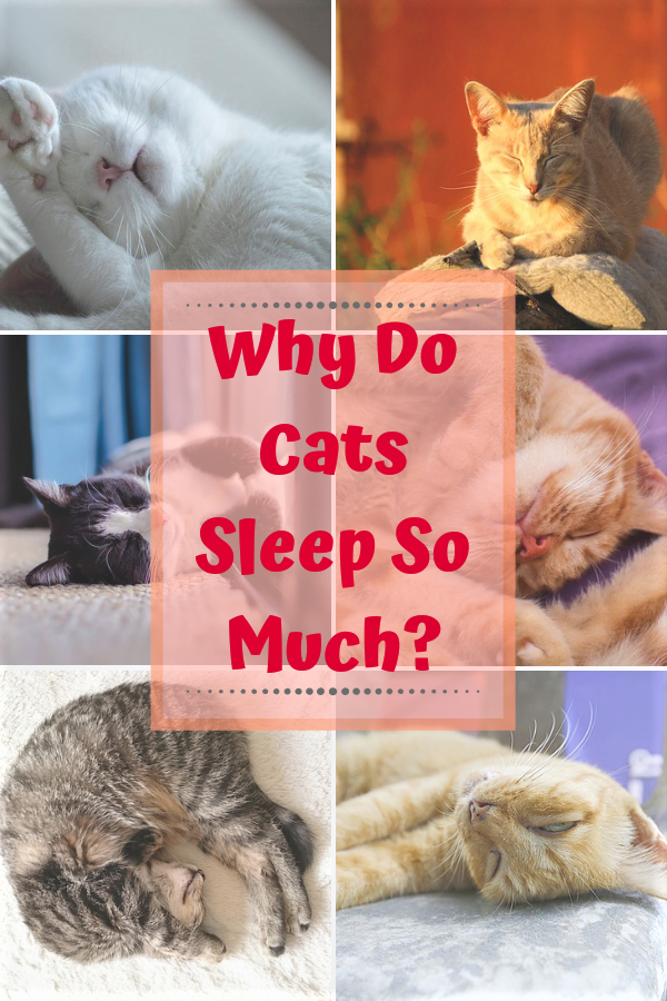 Why Do Cats Sleep So Much? Cat sleeping, Cats, Cat love