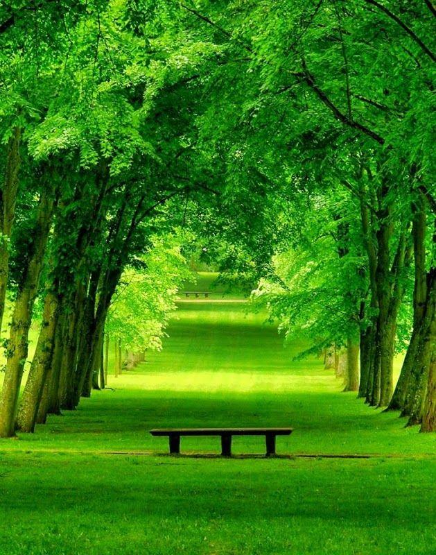 Green Park Beautiful landscapes, Nature, Landscape
