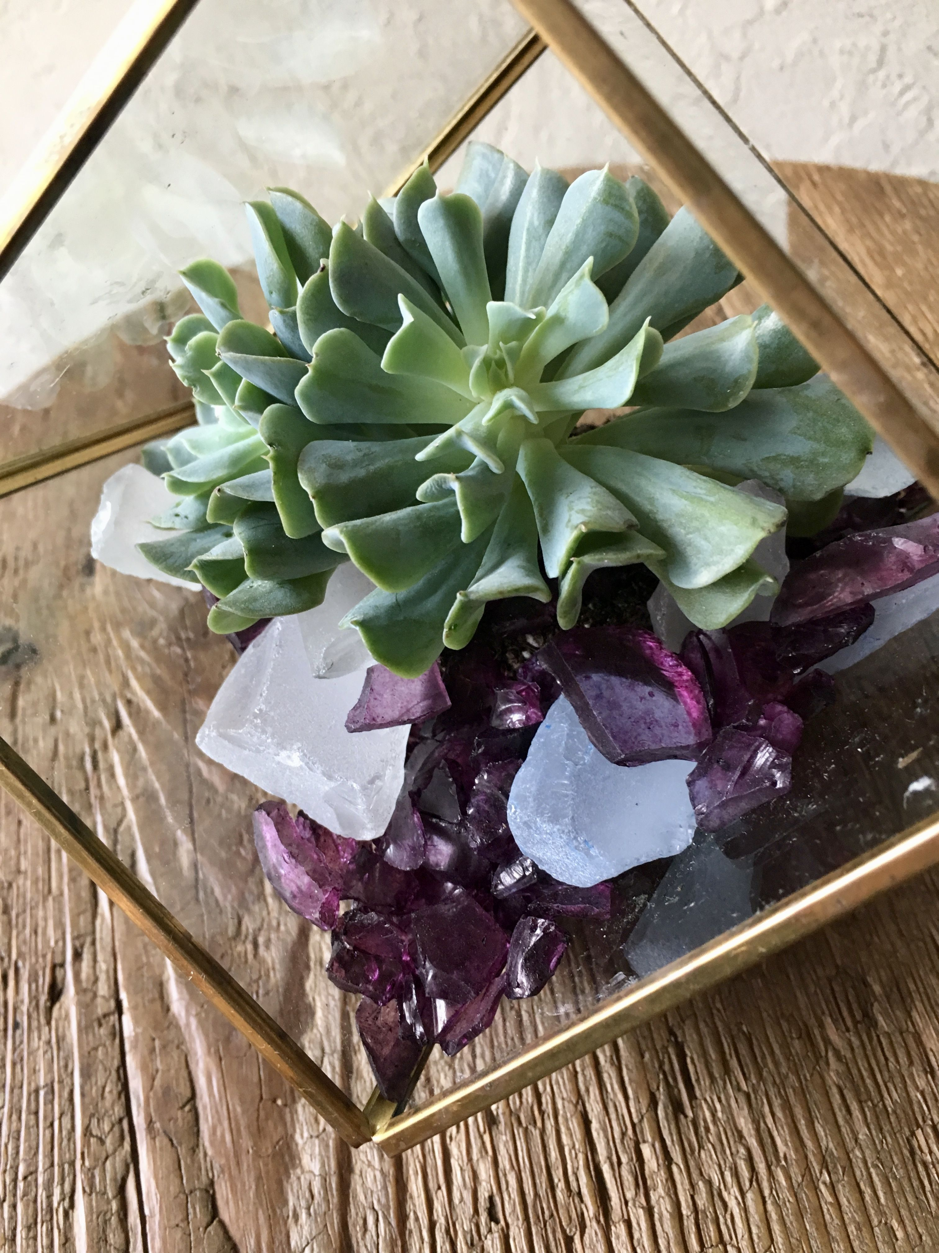 Pin by Rachelle Soucy on Terrariums by BOTANY {floral