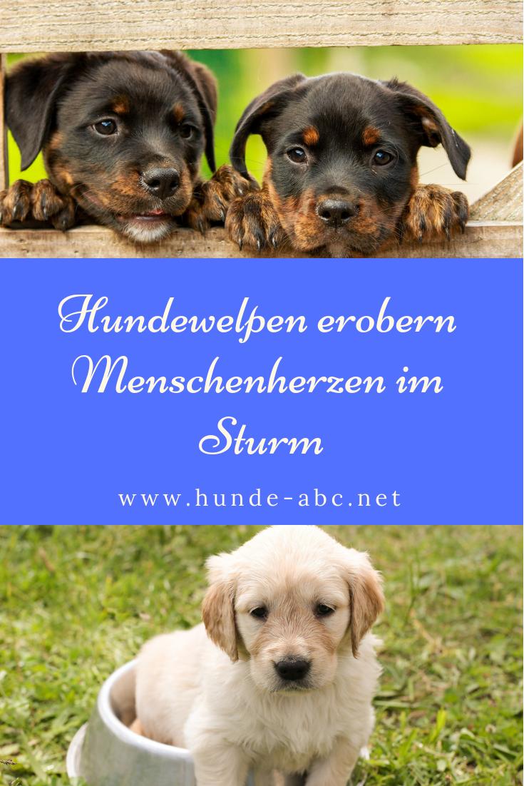 Hundewelpen Erobern Menschenherzen Im Sturm Allgemeine Infos