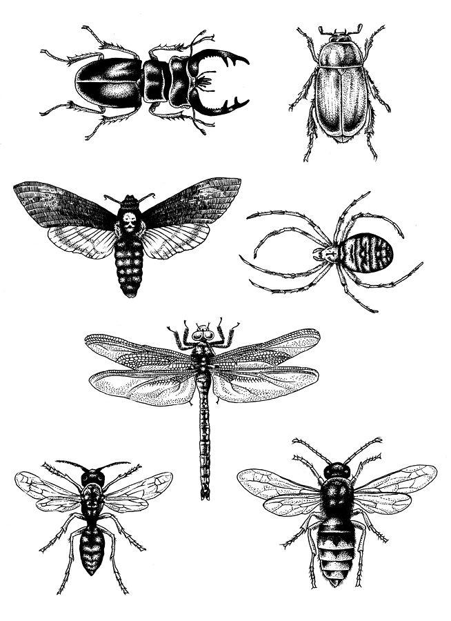 LE DIABLE, PROBABLEMENT | Tatouages | Pinterest | Insectos, Tatuajes ...