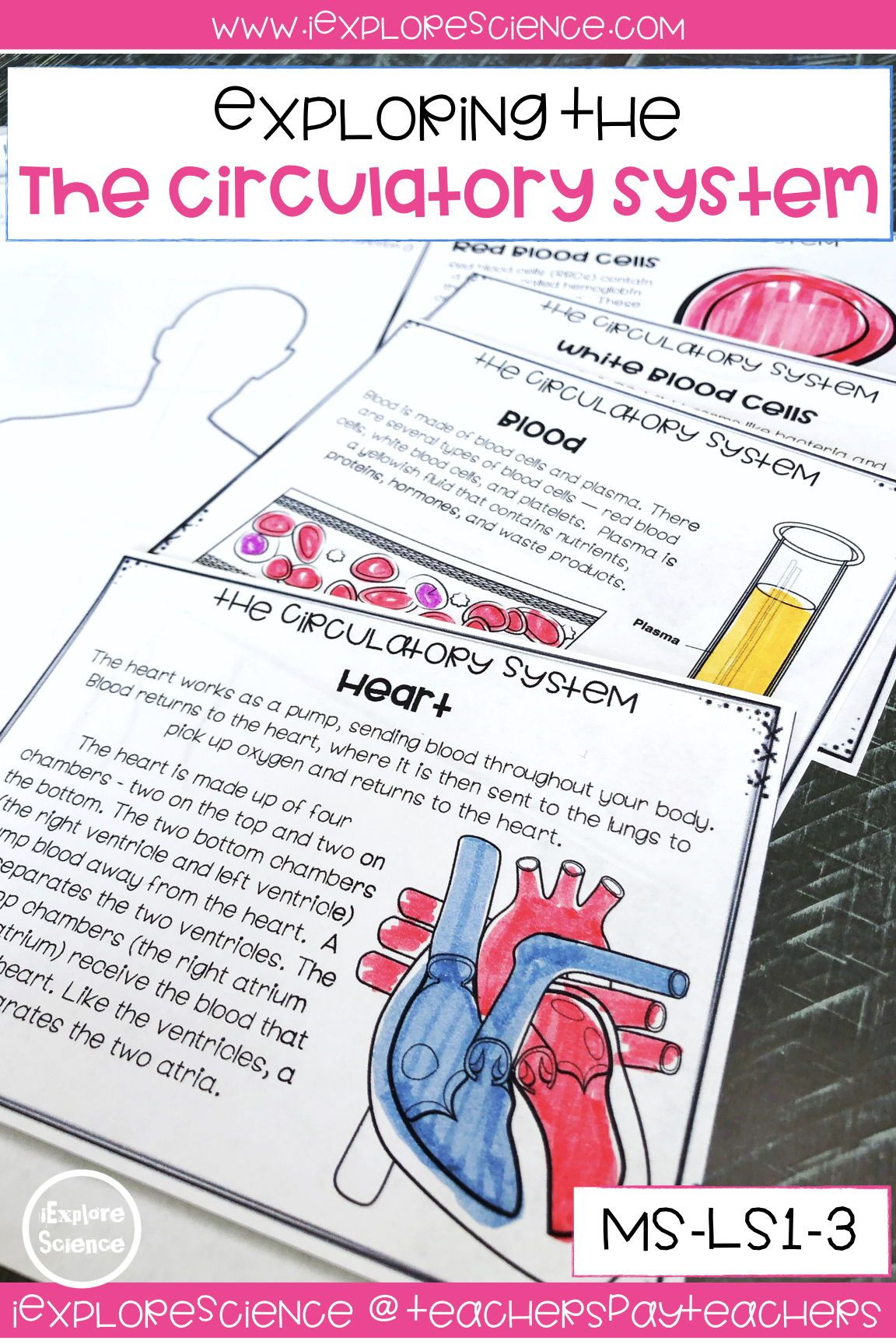 Exploring The Circulatory System Activity Set Ms Ls1 3