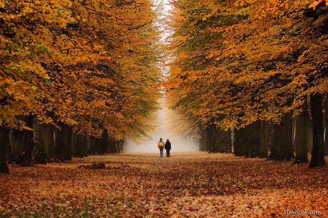 Be still my heart - dreaming of walking down this path with trees overhead, leaves on the ground and foggy mist!