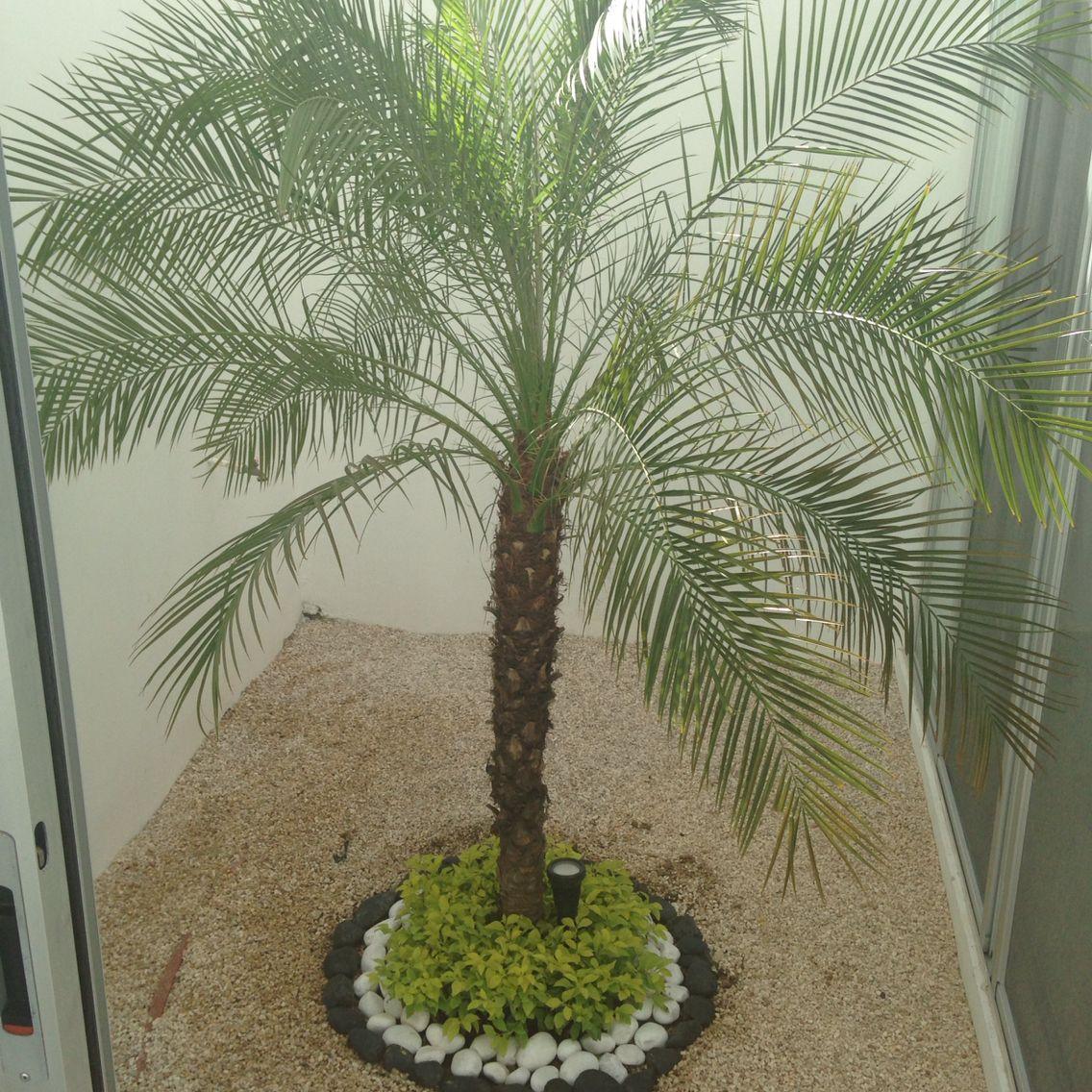 palmera rubelina con duranta y piedra de rio jardines