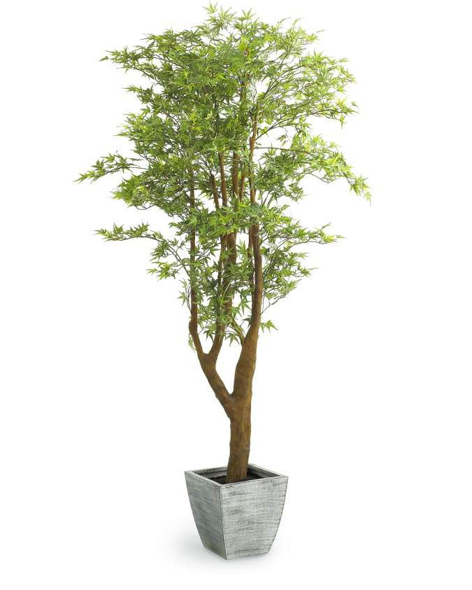 Update Your House With Home Decor That Ll Make This Year Amazing The Pier 1 Faux Japanese Maple Adds A Touch Of Artificial Trees Trees To Plant Japanese Maple