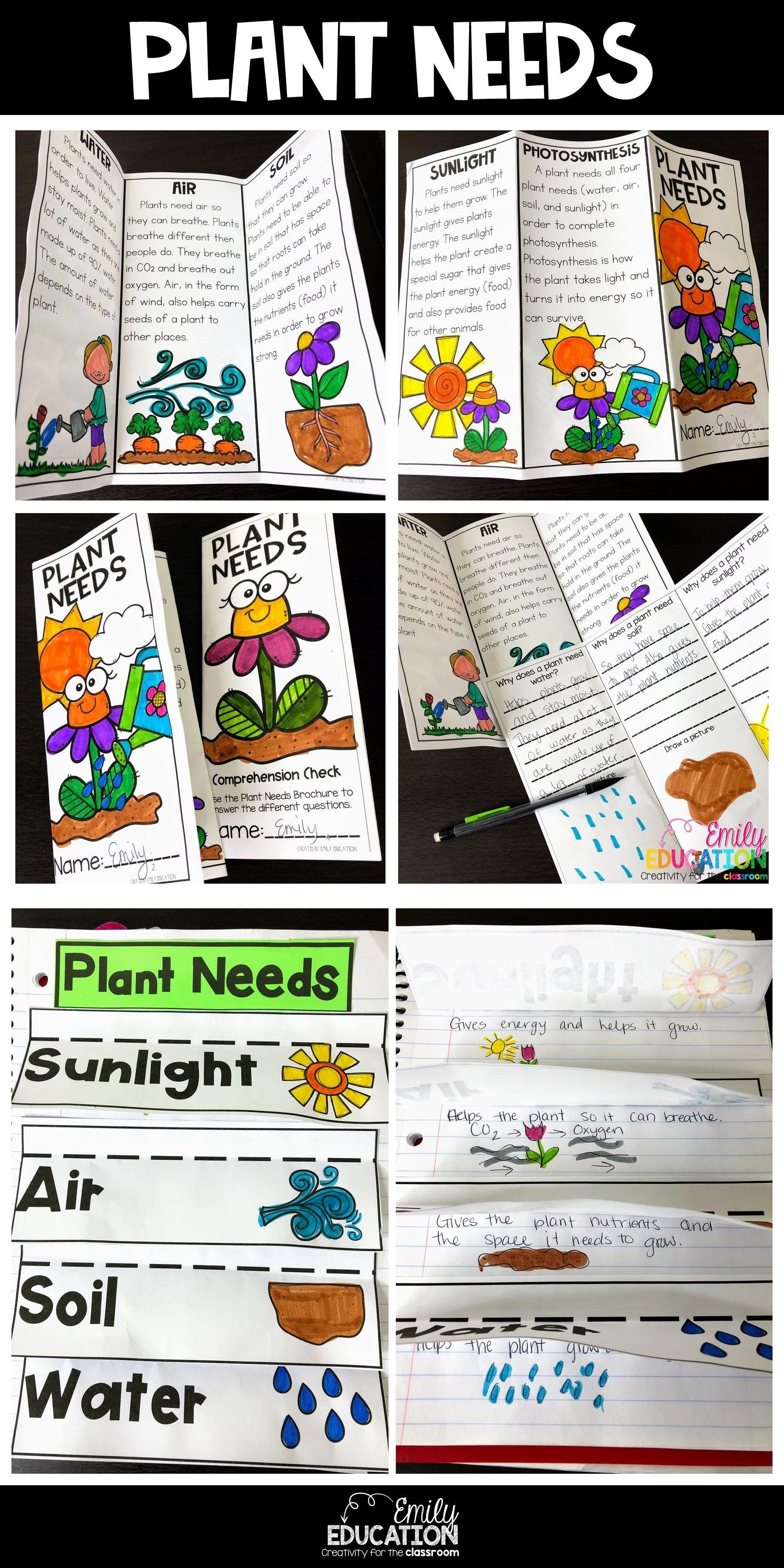 Plant Needs Activities