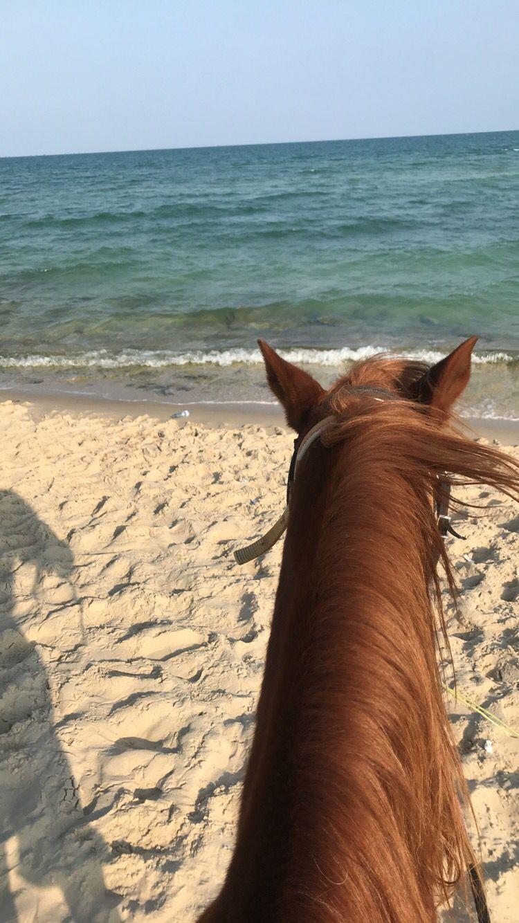 Pin By Clothilde Laisney On خيل Creative Instagram Stories Beautiful Horses Ocean Wallpaper