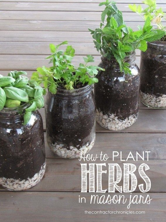 How To Plant Herbs In Mason Jars Planting Herbs Indoor Herb