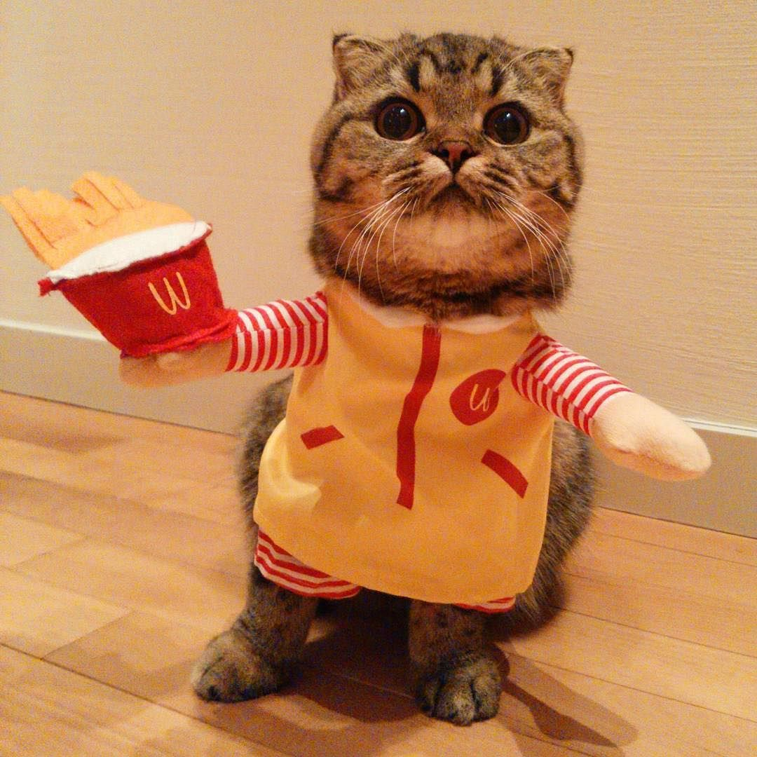She Started Part Time Job She Recommends French Fries Persistently Thanks For 20160121kinako Costume Show Unique Animals Pets Animal Costumes