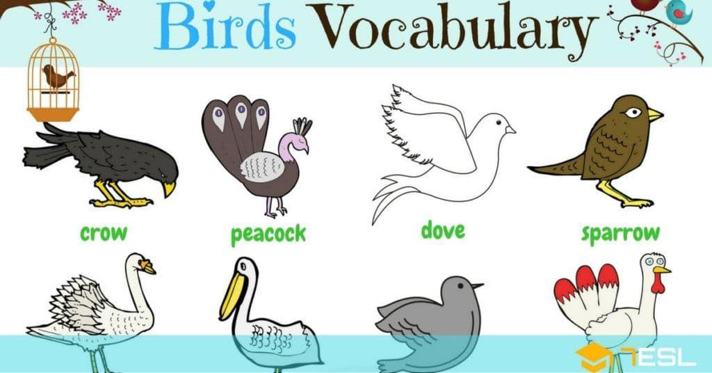 Learn Bird Names in English | Testo English | English