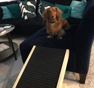 DachRamp Dog ramp, Dogs, Pet ramp