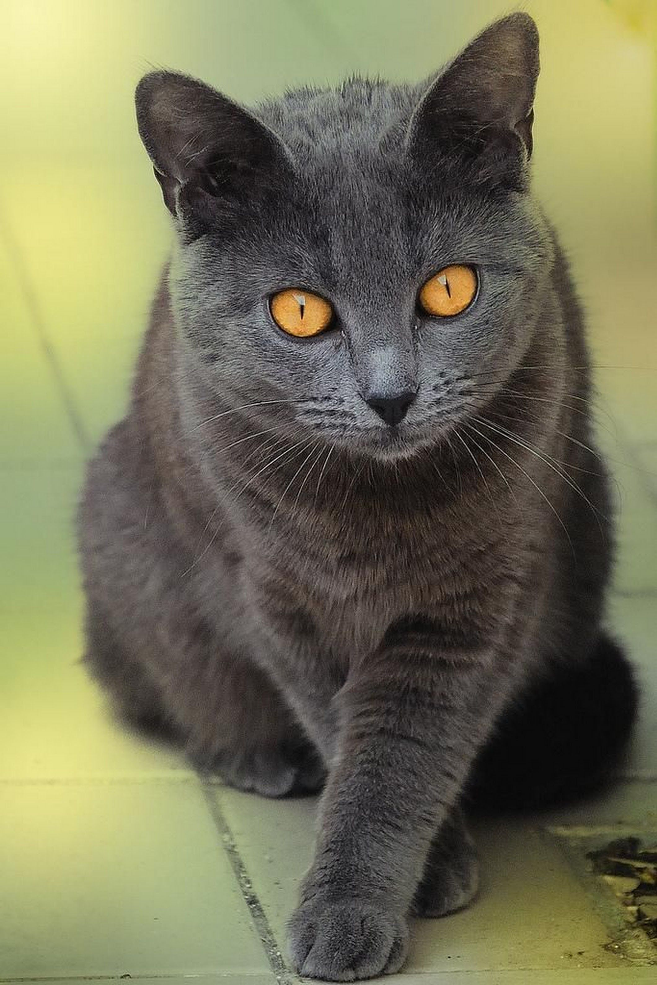 Pin by Mary Kent on Cats and Kittens Pinterest Cats