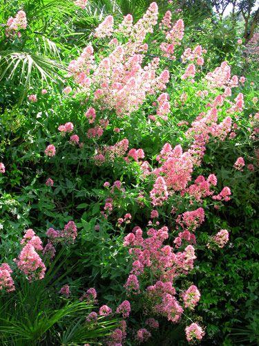 15 Erbacee Perenni A Crescita Lampo Giardinaggio Piante Da