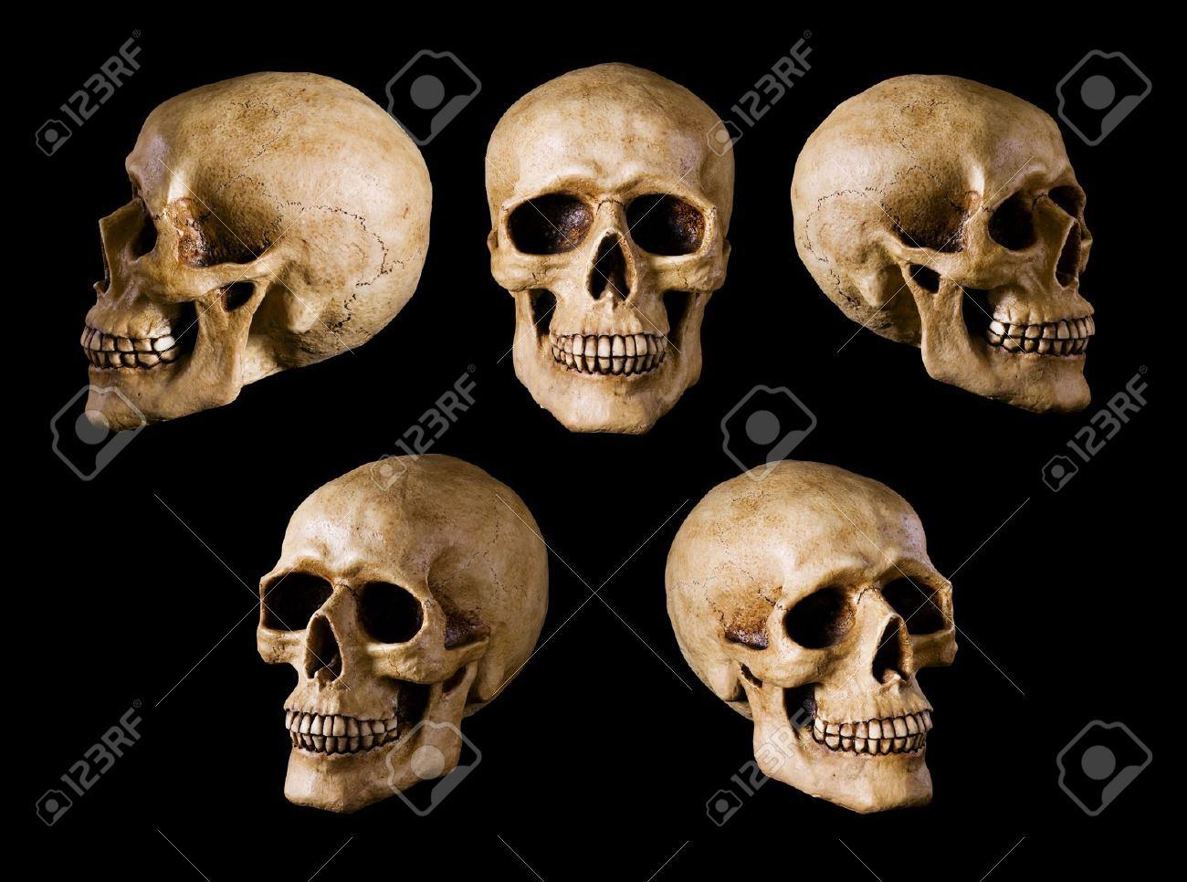 skull different angles google search inspirations