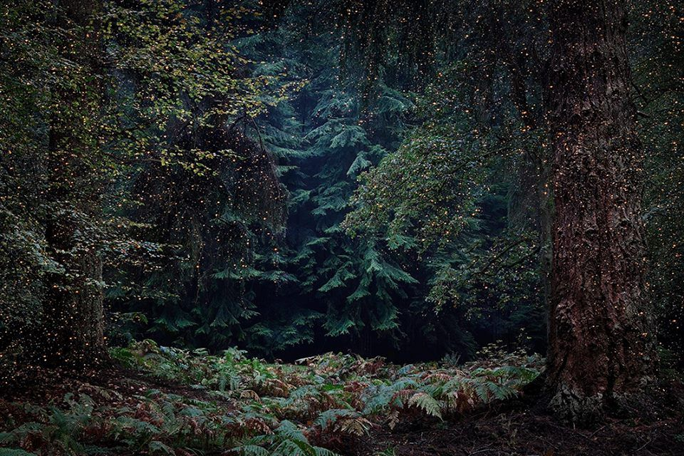 его картинки таинственного леса тех