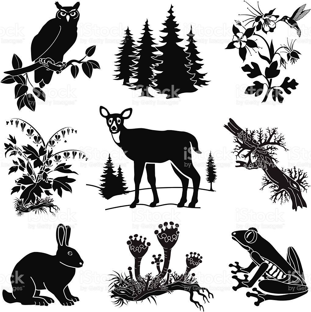 Vector Forest Wildlife Set In Black And White Vector Id538127771 1020 1024 Forest And Wildlife Line Art Vector Vector Art